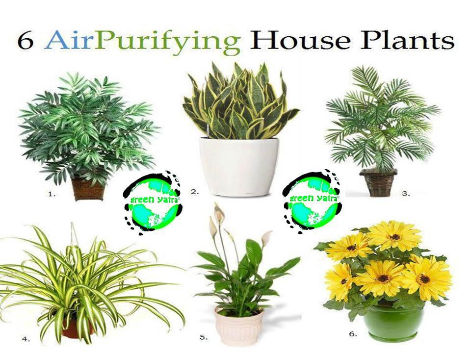 Indoor Plants That Purify The Air Naturally