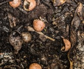 Guest Post: Are You Digging Composting?