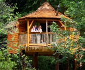 Forest Holidays' named Best Sustainable Holiday at Family Traveller Awards