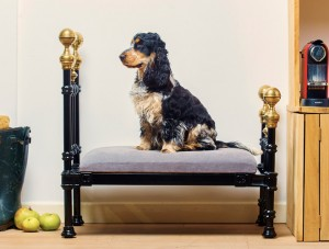 dog_somerset_bed_1