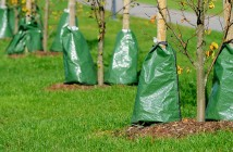 Are-trees-important-National-tree-week-young-saplings