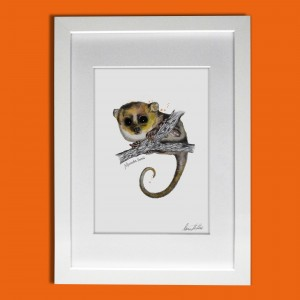 LEMUR IN A FRAME seed colour bg